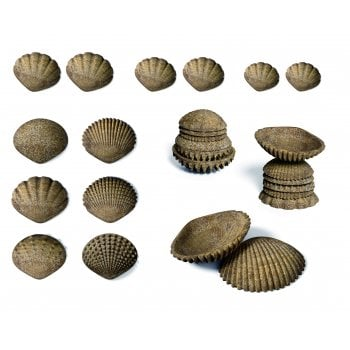 Eco Friendly Tactile Shells - Pk36